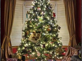 Jak vybrat vánoční stromek?