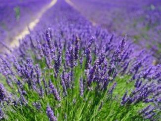 Které bylinky prospívají různým typům pleti?