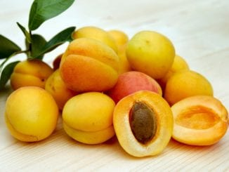 Co platí na ovocné mušky?