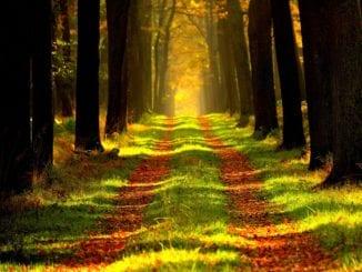 Proč se jít projít do lesa?