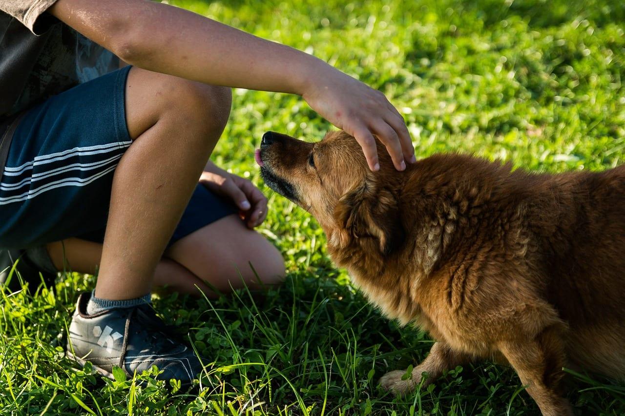 Jak vybrat krmivo pro svého psa?