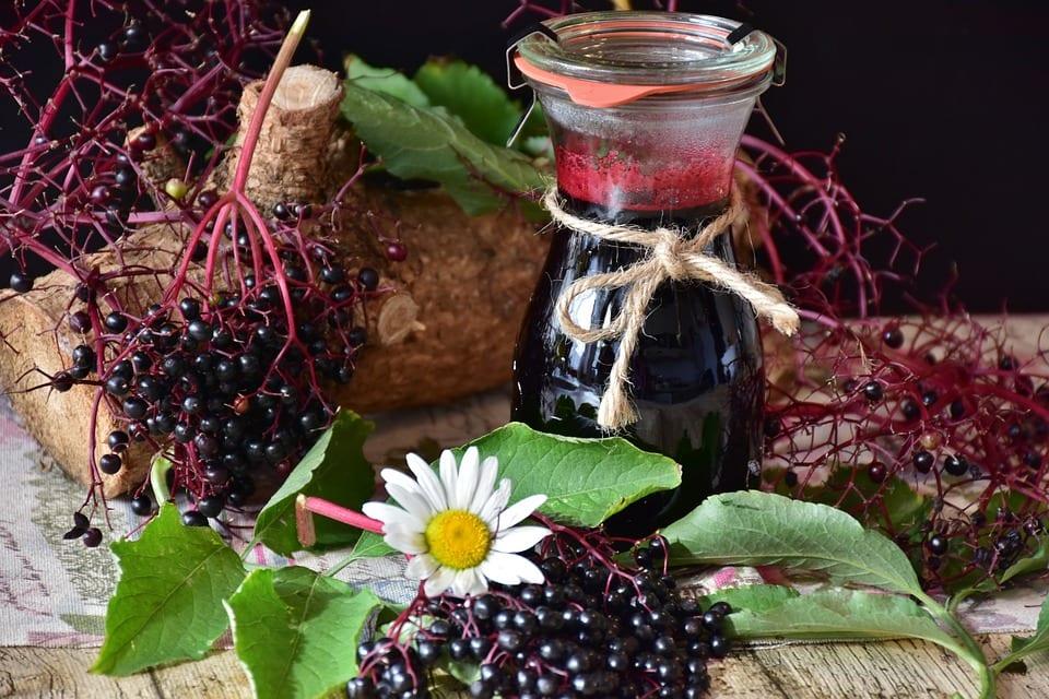 Jak si připravit bezinkový likér