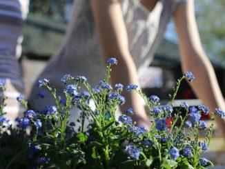 Jak se starat o okrasnou zahradu během června?