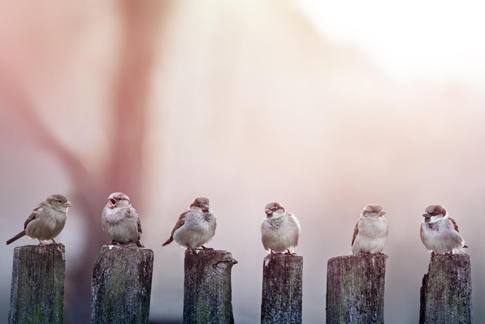 Ptáci na domě? Víme, jak se jich efektivně zbavit