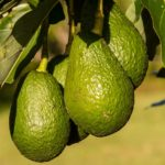 3 způsoby, jak lze hnojit půdu zcela přírodním způsobem