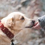Postroj nebo obojek – co je u psů oblíbenější?