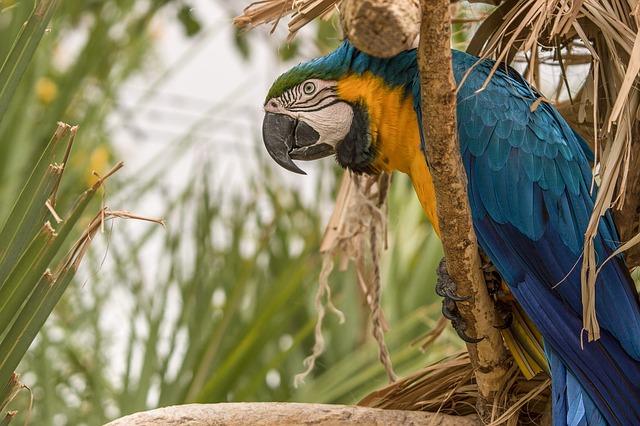 Tri druhy papagájov, ktorí nie sú vhodní do malých bytov