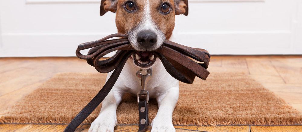 Obojky pro psy: Víte, jak správně vybírat?