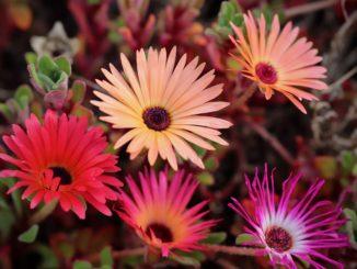 Budoucnost vpéči o rostliny – fytoinjektor, který pomáhá nejen sléčbou
