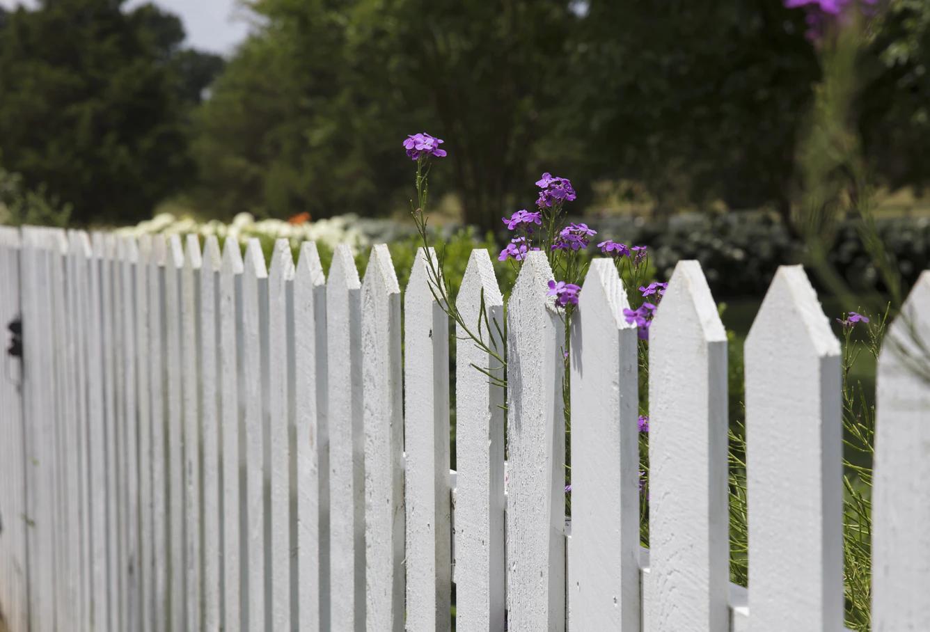 Sousedské problémy: Kdo má povinnost postavit plot?