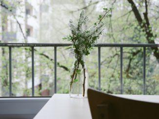 6 potravin, které můžete použít k udržení čistoty domova