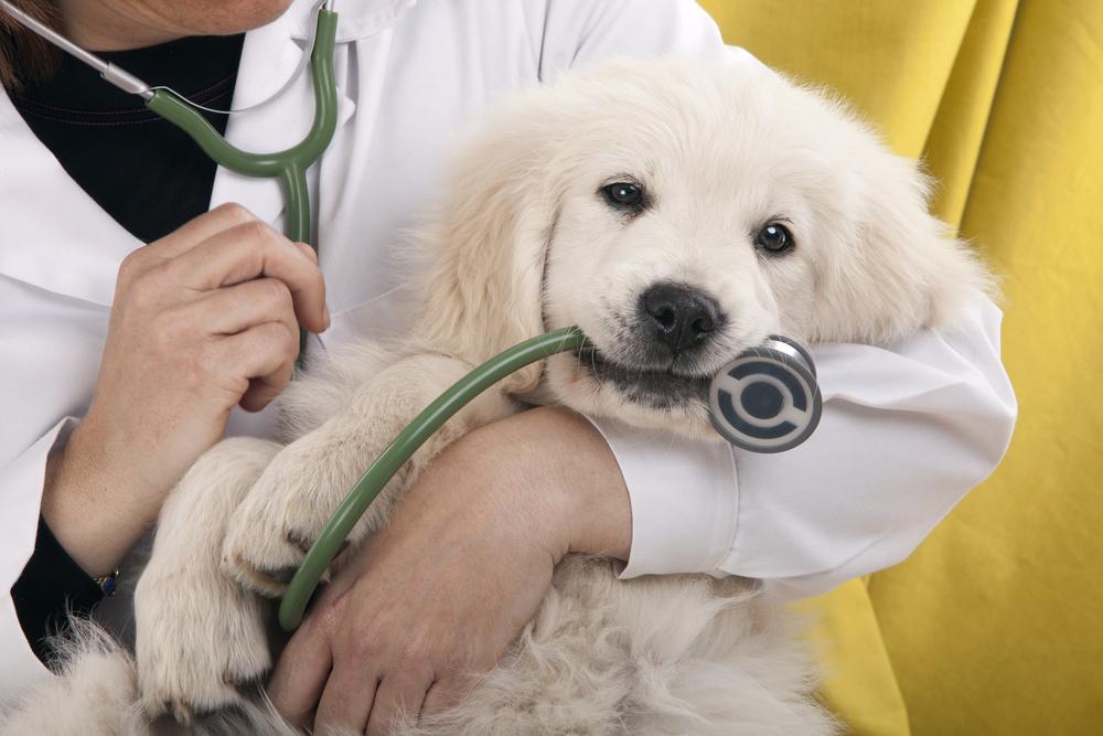 Veterinární pohotovost a klinika pomáhá s péčí o malá i velká zvířata