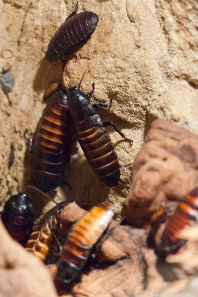 Váš domov může být lákadlem pro hmyz. Jak tomu zabránit?