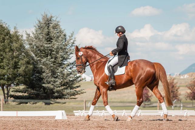 Povinná výbava pro koně a jezdce na parkour